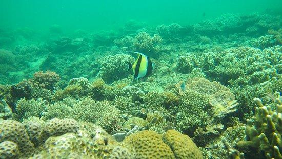 Foto de Gaya Island Resort