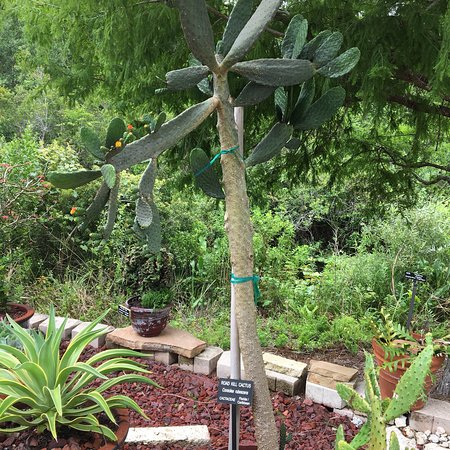 Florida Botanical Gardens - Picture of Florida Botanical