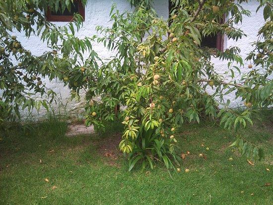 Estancia Guardia del Monte: Lemon Tree