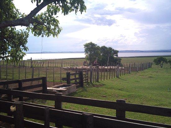 Estancia Guardia del Monte: Sheep