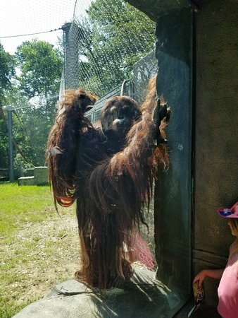 Cameron Park Zoo: 20180602_102754_large.jpg