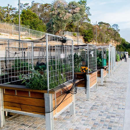coal loader centre for sustainability: There are many, many raised garden beds.