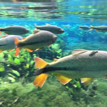 Aquario Natural Photo