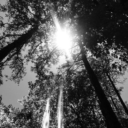 Garvan Woodland Gardens照片