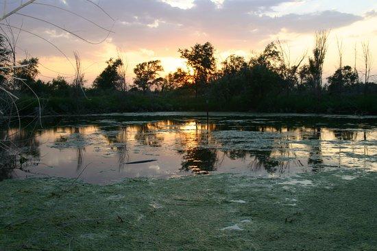 Brownfield, TX: pond