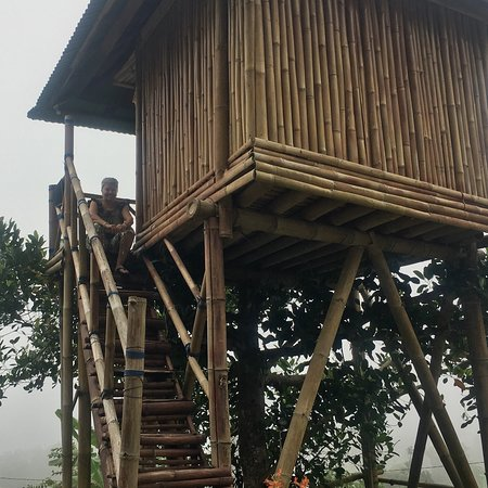 Loved the cute tree house