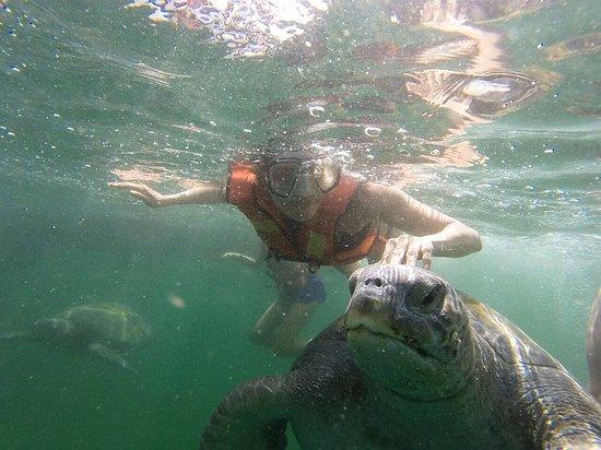 写真Nadando con Tortugas en El Nuro枚