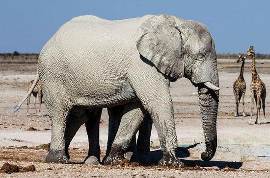 3 Days Etosha National Park