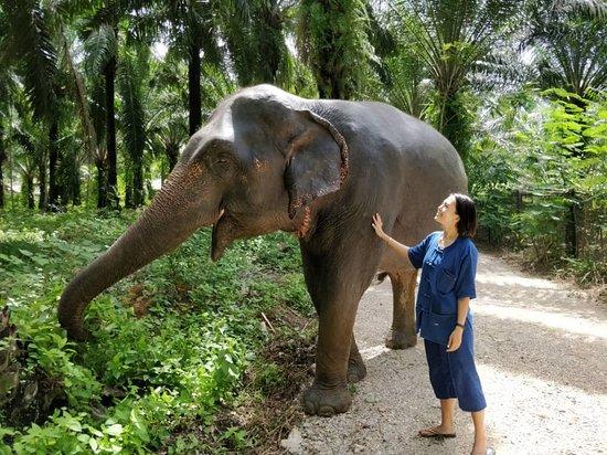 Сай-Тай, Таиланд: Walking with elephant at the Krabi Elephant House Sanctuary
