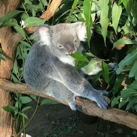 龙柏考拉野生动物园照片
