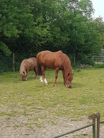 Wellington Farm Cafe & Tearooms: Horse & Pony