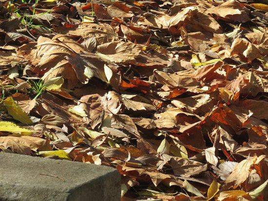 Jasmin Indian Restaurant: Autumn leaves opposite the Jasmin Restaurant entrance