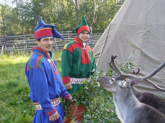 Paltto Elämysretket: reindeer program and sami culture