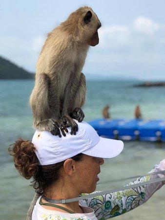 Stimulus Yacht Charter Pattaya: Monkey Island! Amazing!