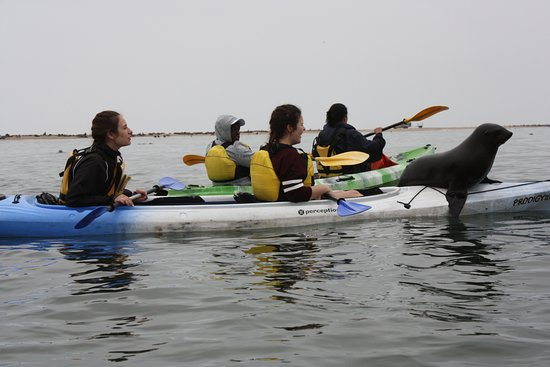 Namibia Kayak Tours: The International School of Walvis Bay outing 2017