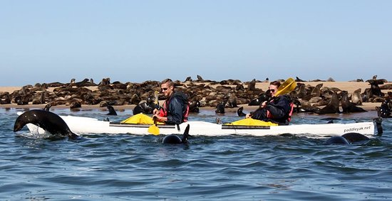 Namibia Kayak Tours: Huge colony of seals to kayak amongst