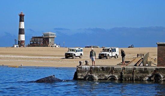 Namibia Kayak Tours: Whale Season