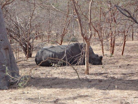 La Petite Cote, السنغال: Rhino d'afrique du sud