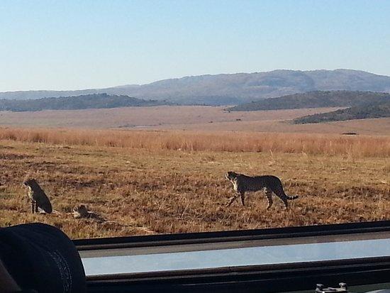 Welgevonden Game Reserve, South Africa: 20180603_090645_large.jpg