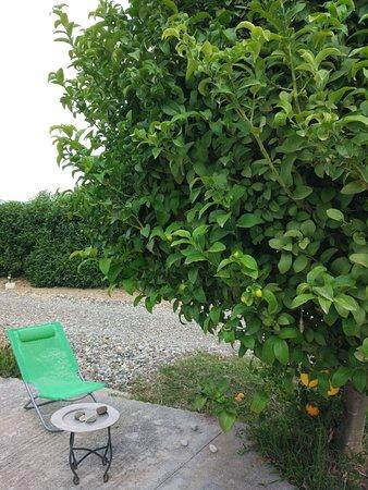 Cartama, Hiszpania: Lemon tree