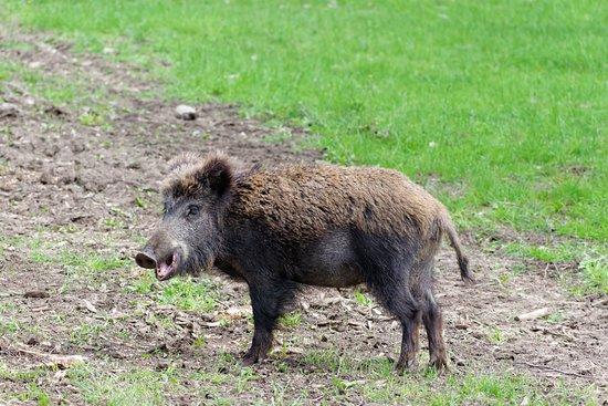 Thorenc, Γαλλία: Pumba ?