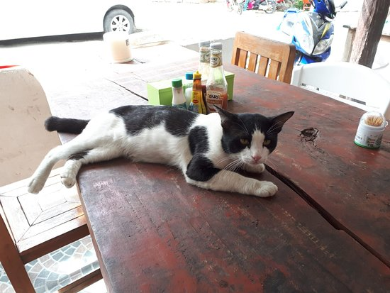 Family Thaifood & Seafood: owner's male cat