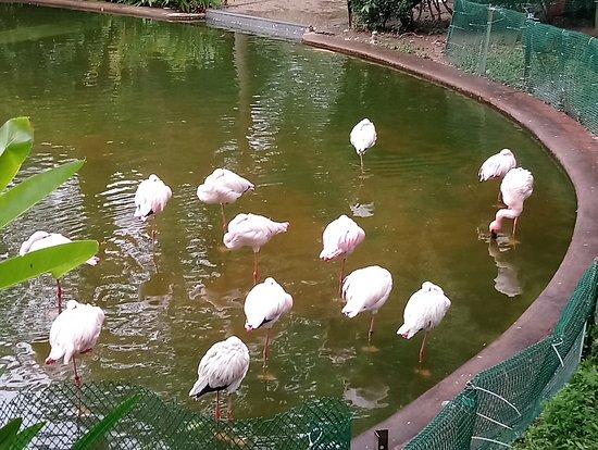 สวนเกาลูน: Flamingo