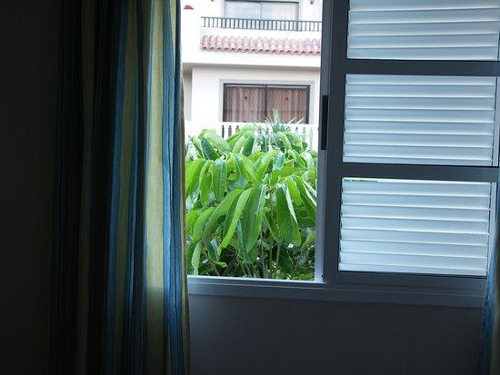 Jardin del Conde: Ein Baum dirket vorm Schlafzimmerfenster ist bei Wind sehr laut.