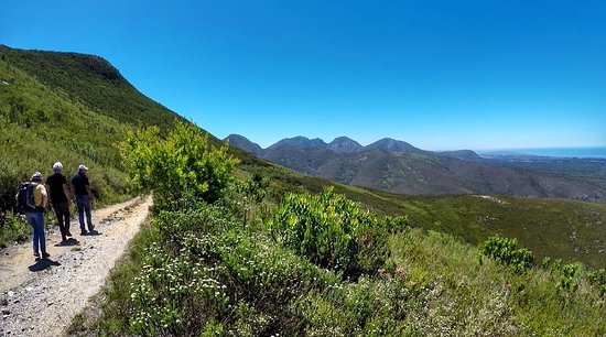 Wilderness, Zuid-Afrika: Mountain Fynbos hike on the Tierkop Trail in the Outeniqua Mountains - suitable all year