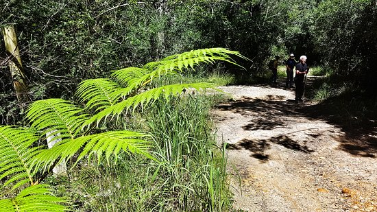 Wilderness, Sudáfrica: Forest hike on the Perdekop trail between Knysna and Plettenberg Bay