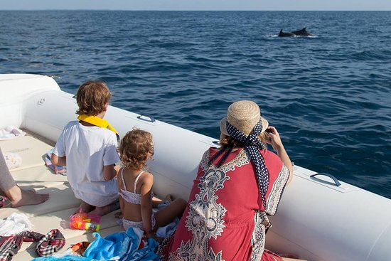 Rovinj, Croacia: family watching dolphins play