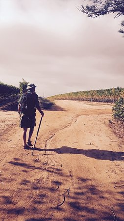 Cape Camino: A personal pilgrimage along an urban walking route