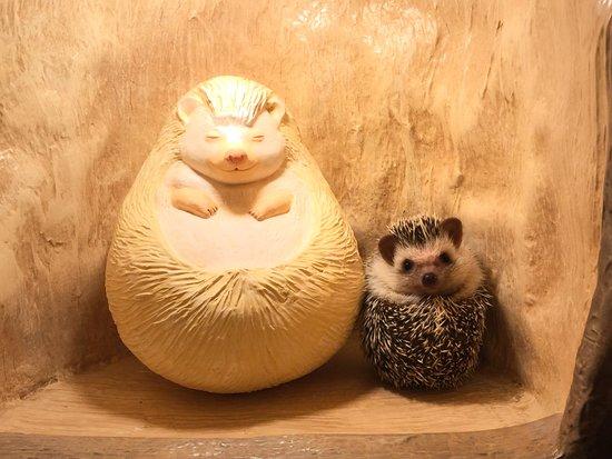 Hedgehog Cafe Harry Yokohama: くるんとマルマルはりちゃんとパシッリ