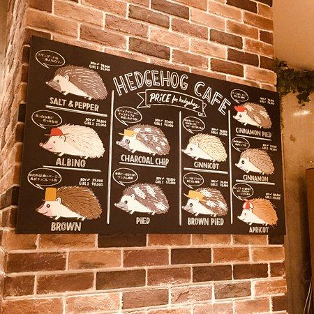 Hedgehog Cafe Harry Yokohama: はりちゃんのカラー表