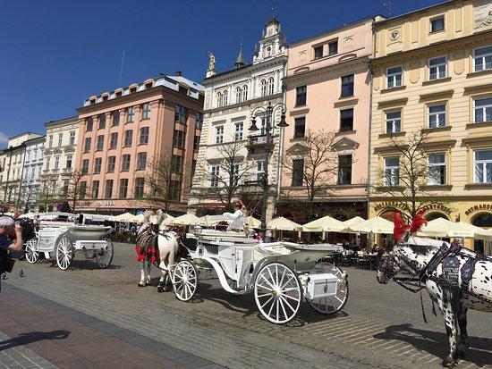 Hotel Jan: Main square's many horse drawn coaches.
