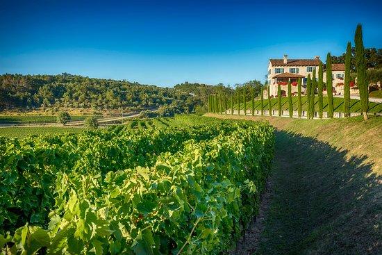 Kabola Winery: Winery Kabola with wineyards