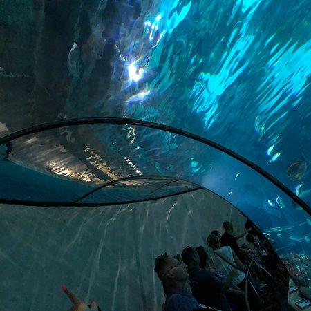 L'Aquarium de Barcelona ภาพถ่าย