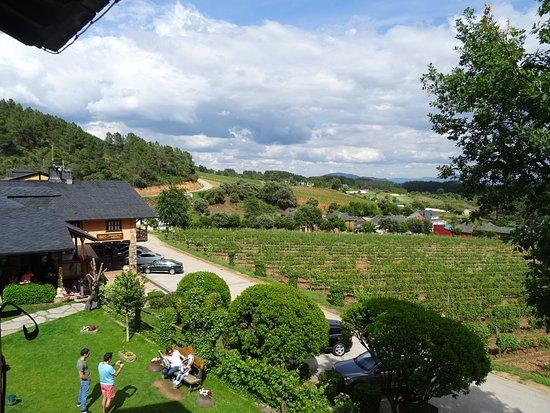 Palacio de Canedo Restaurant: El entorno con las viñas