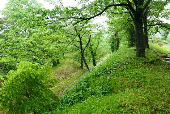 Kamegajo Park: 緑の多い城ですね。桜の季節は桜がかなりキレイです。