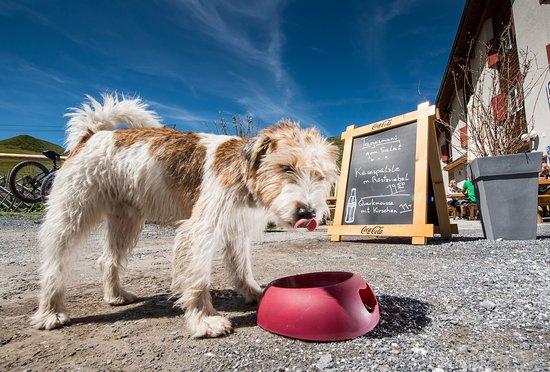 Fideris, Schweiz: Hunde sind bei uns willkommen!