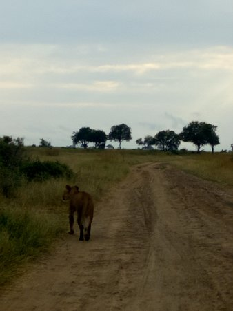 Safari 56照片