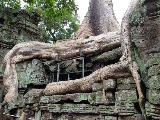 ปราสาทตาพรหม: the tree root that looks like 'snake'