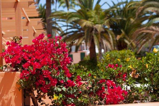 Jardin del Sol Apartments : Jardines / Gardens