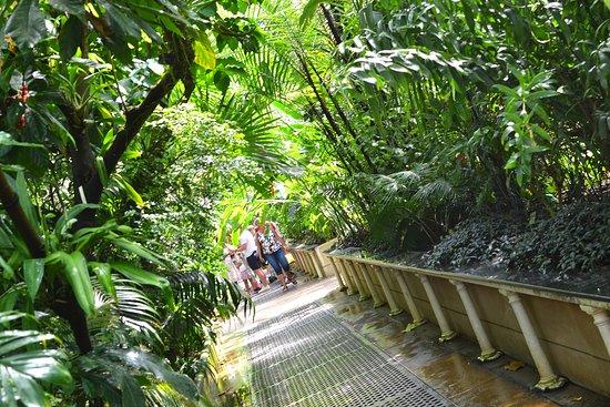 Royal Botanic Gardens, Kew: Palm House