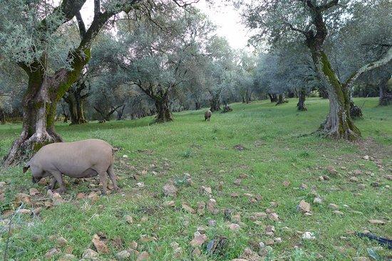 La Posada de San Marcos: Local countryside