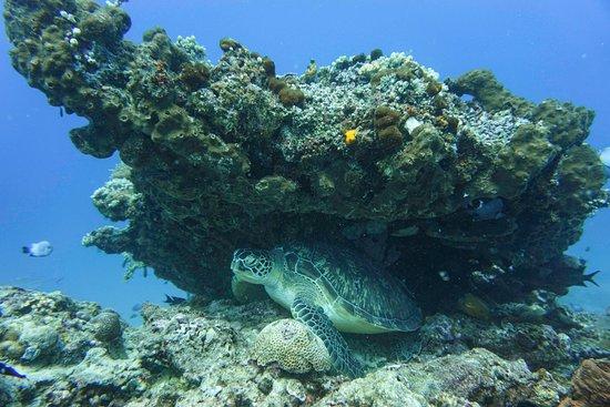 Manta Dive Gili Air: Great underwater photographer!