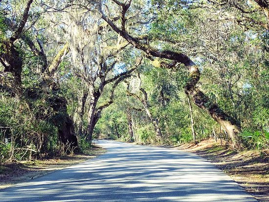 Fort Clinch State Park: beautiful tree lines road through the park