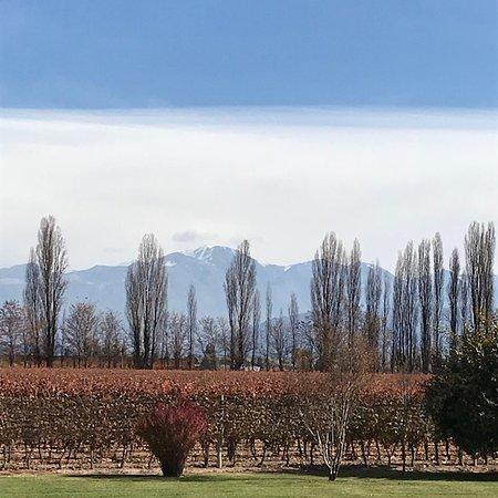 Tasting Mendoza: Vinhas com a Cordilheira ao fundo