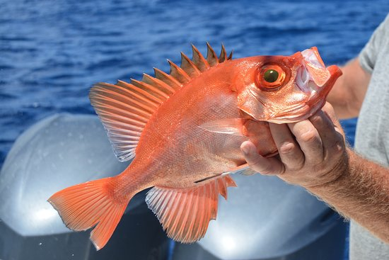 Fishing St. Croix: Caribbean fish can be very colorful