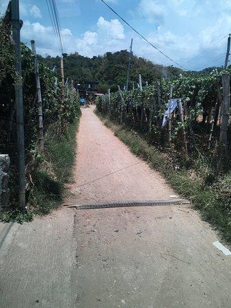 写真Gapuz Grapes Farm枚